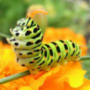 Раскраски Бабочка - скачать бесплатно