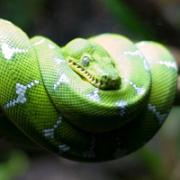 Раскраски Змея - скачать бесплатно
