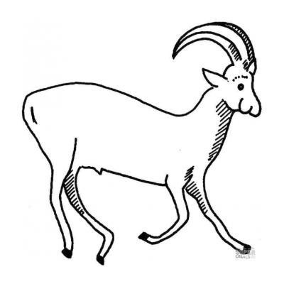 Антилопа на лугу