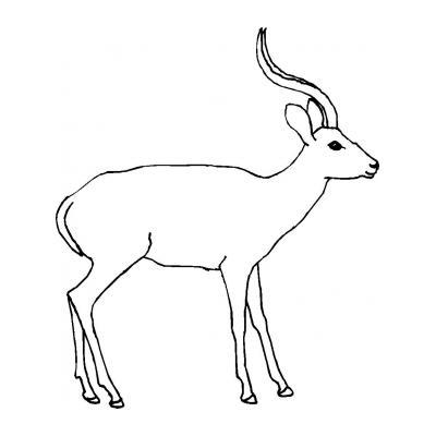 Красивая антилопа