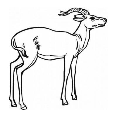 Антилопа на природе