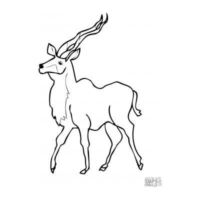 Грациозная антилопа