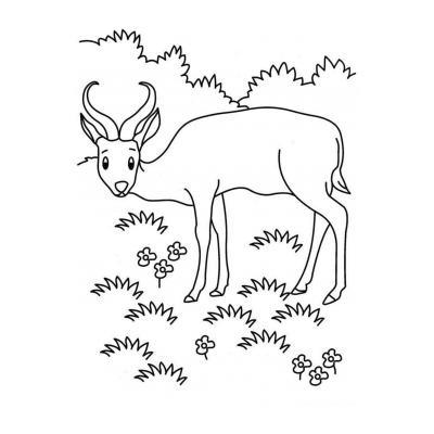 Антилопа - травоядное животное