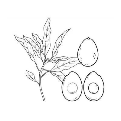 маленькое авокадо