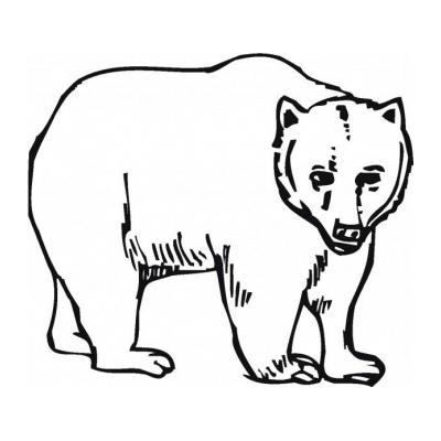 Раскраска с медведем
