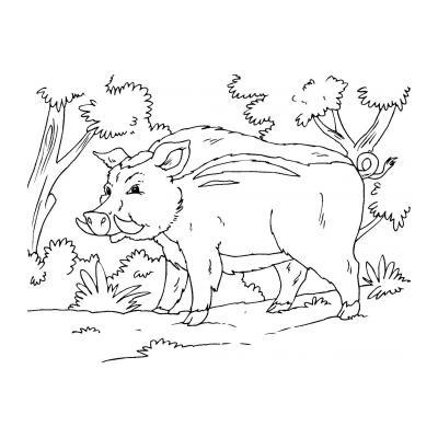 Кабан - житель леса