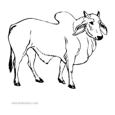 Быстрый бык
