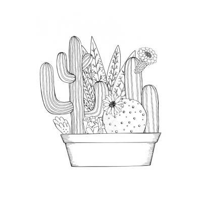 Раскраска кактус