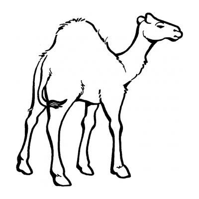 Верблюд - рисунок для раскрашивания