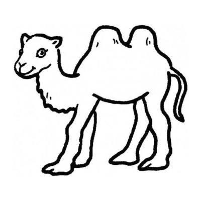 Красивый верблюд