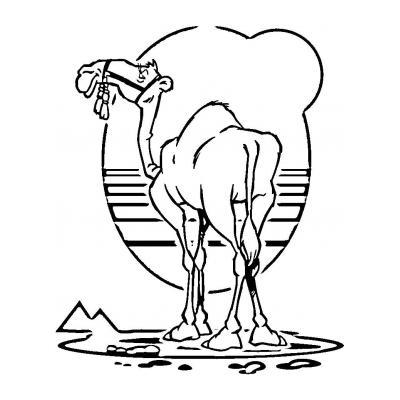 Верблюд - корабль пустыни