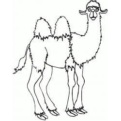 Мощный верблюд
