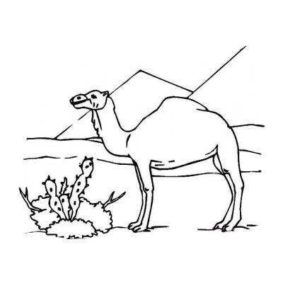 Верблюд с горбом