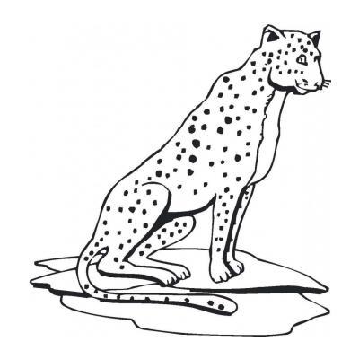 Раскрасить гепарда