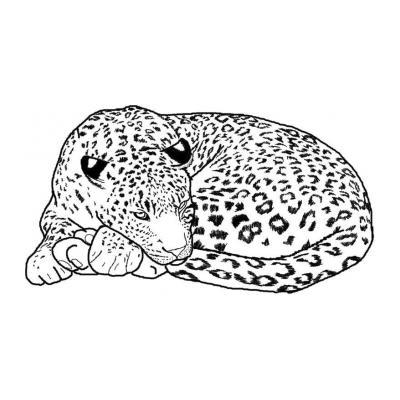 Раскраска гепард