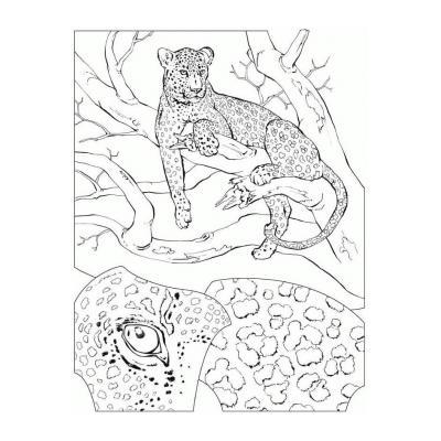 Гепард - быстрый хищник