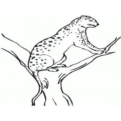Гепард самый быстрый