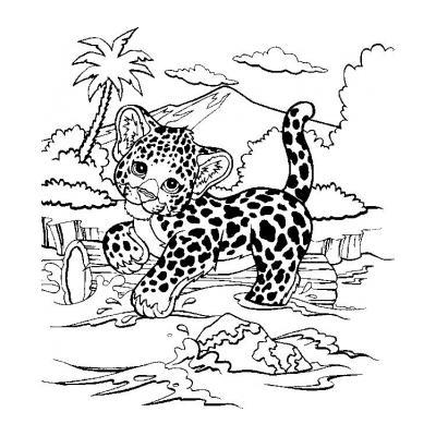 Красавец гепард