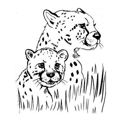 Гепард - раскраска для детей