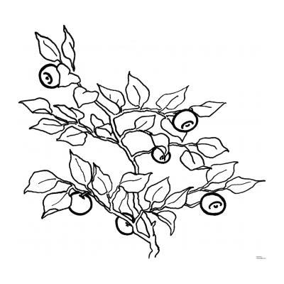 Раскраски Ягоды - распечатать, скачать бесплатно