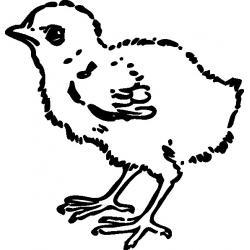 Раскрасить Цыпленка