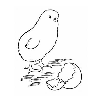 Раскраска цыпленок