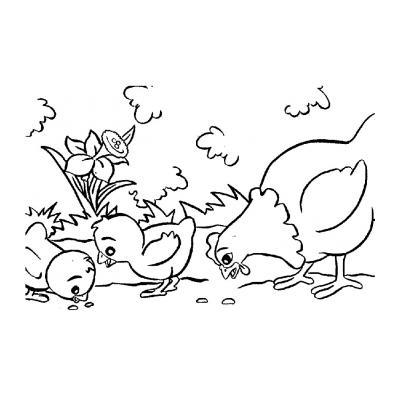 Цыпленок и курица