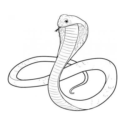 Кобра - ядовитая змея