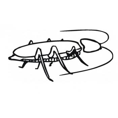 Раскраска Таракан - распечатать, скачать бесплатно