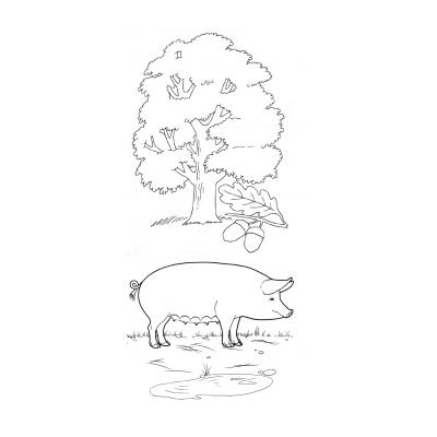 Раскраска свинья под дубом - распечатать, скачать бесплатно