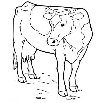 Раскраска с коровами