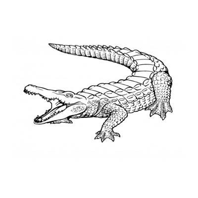 Крокодил - дикое животное