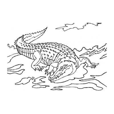 Крокодил - раскраска для детей