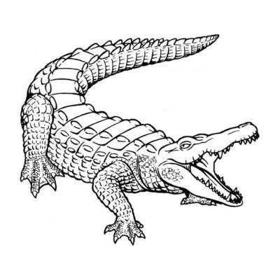 Хищник Крокодил