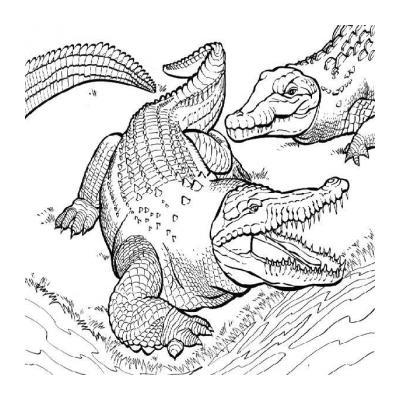 Злой крокодил