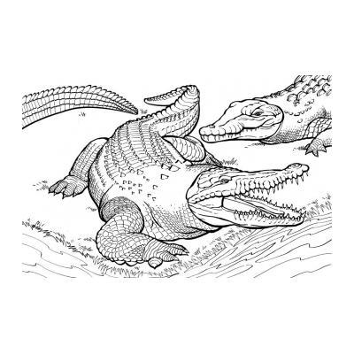 Серьезный крокодил