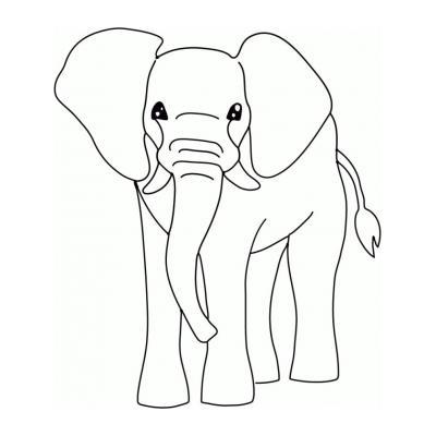 Слон - травоядное животное