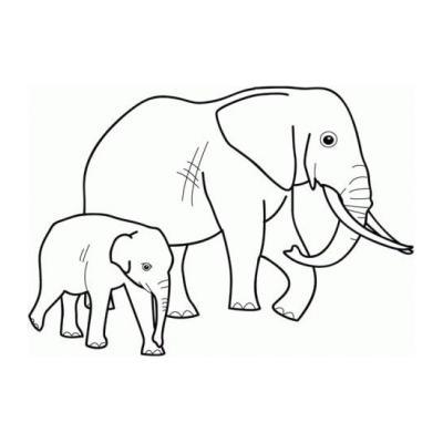 Слон - крупное животное