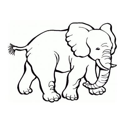 Слон - раскраска для детей
