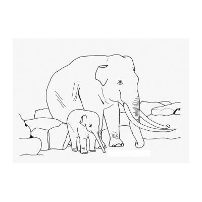 Слон живет в Африке