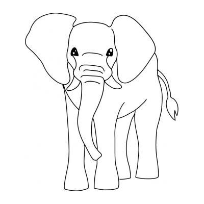 Слон живет долго