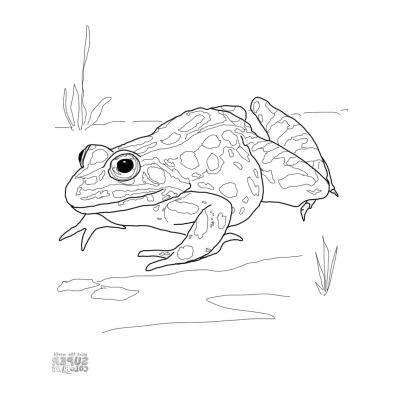 Лягушка - земноводное