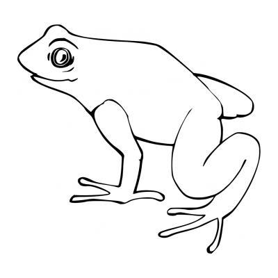 Раскраска лягушка