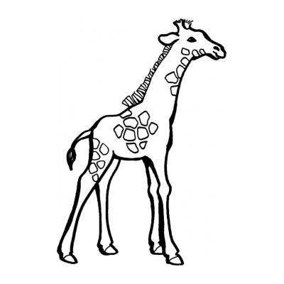 Длинный жираф