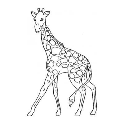 Жираф в пятнышках