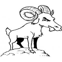 Красавица - коза