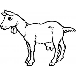 Раскраска с козой