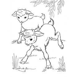 Хорошая Коза
