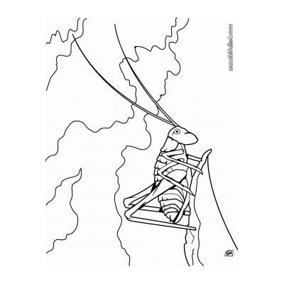 Раскраска Кузнечик - распечатать, скачать бесплатно