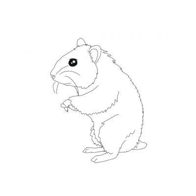 Хомяк - ночное животное